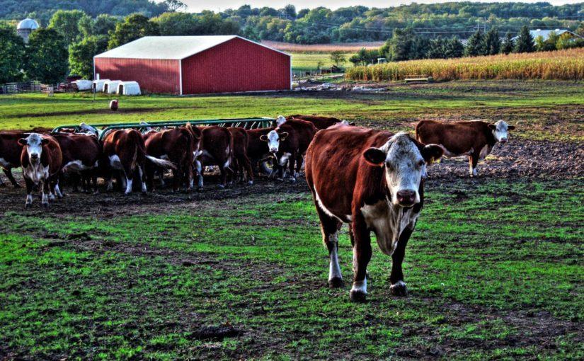 Смолян приглашают принять участие в конкурсном отборе на предоставление грантов на развитие семейных животноводческих ферм