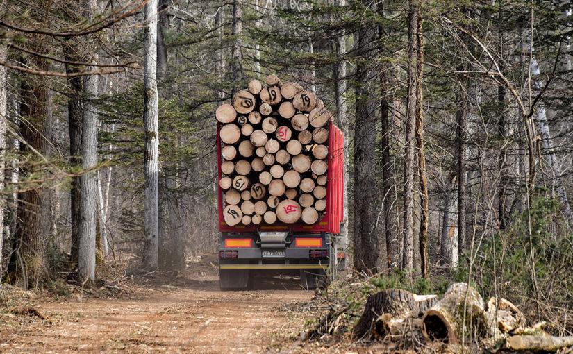 Владимир Путин решил запретить вывоз кругляка, чтобы стимулировать лесопереработку