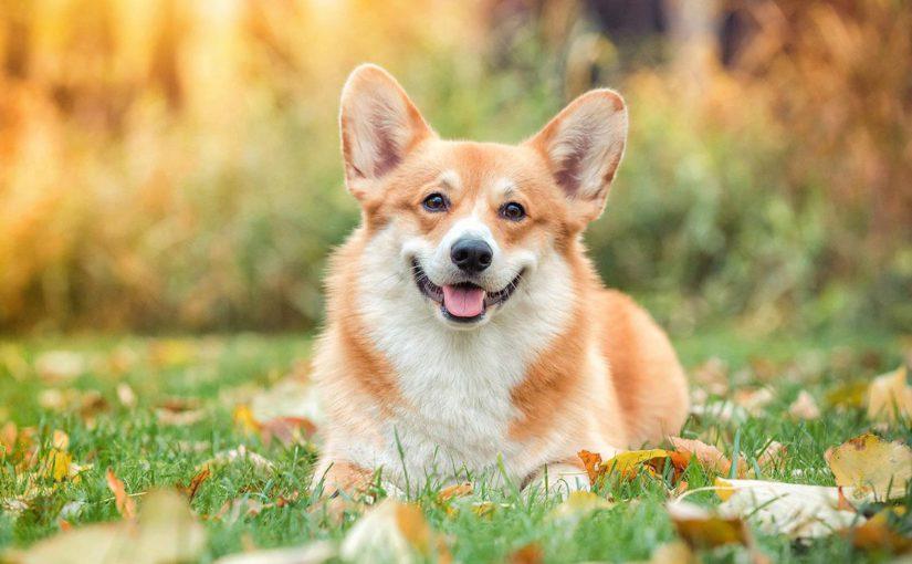 Российская кинологическая федерация рассказала о самых  распространенных мифах о собаках