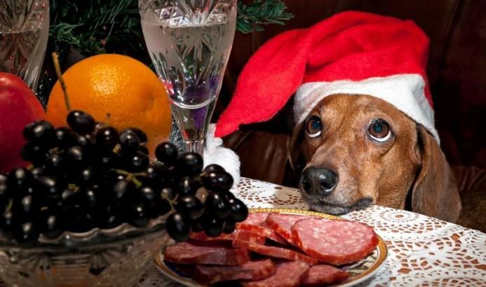 Кинологи призвали не кормить собак с новогоднего стола