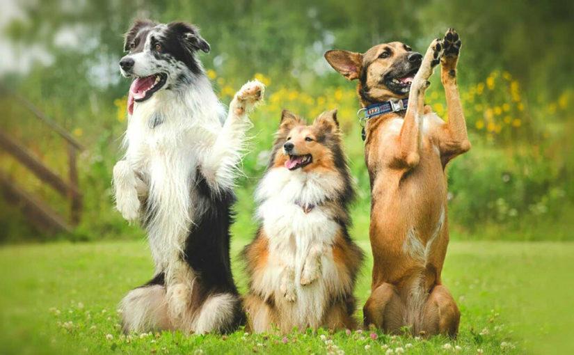 Кинологи рассказали, какие команды могут спасти жизнь собаке