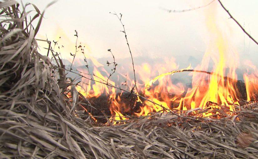 О сжигании сухой травянистой растительности!